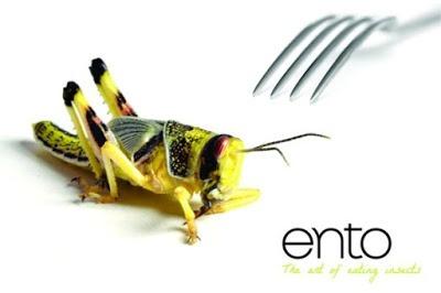 insetti cibo del futuro